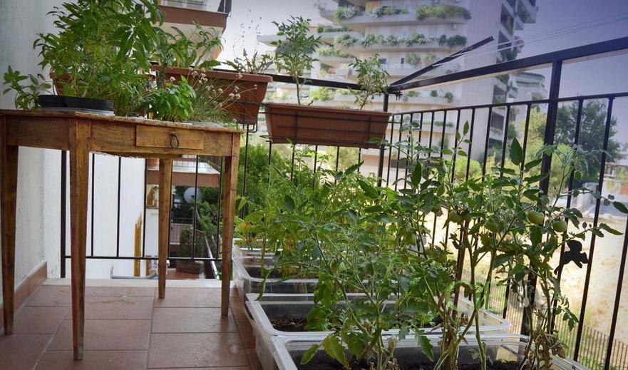Orto sul balcone ecco cosa coltivare in caso di poco for Coltivare sul balcone