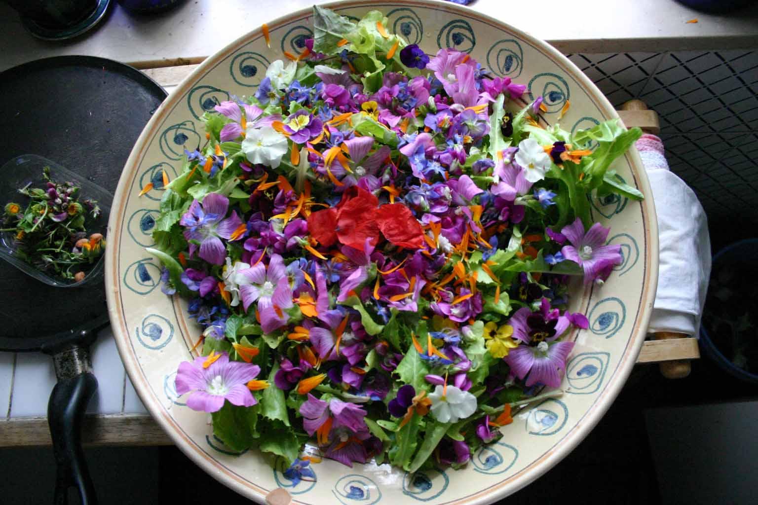 fiori commestibili ecco i 40 che possiamo mangiare cibo