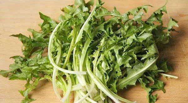 Tarassaco, la cicoria dei prati che aumenta le difese immunitarie