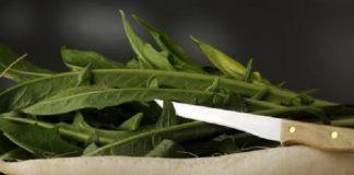 Rafano: la radice aromatica dal sapore inconfondibile. Benefici e proprietà