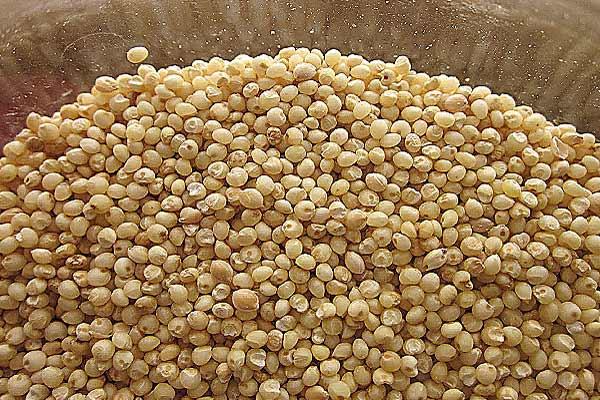 Amaranto, perché è un superfood? Proprietà e benefici del 'falso' cereale