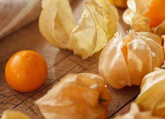 Alchechengi, benefici e proprietà delle bacche arancioni: come usarle in cucina?