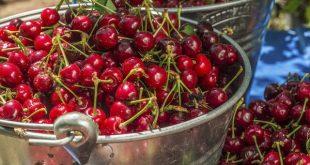 Ciliegie poche calorie tante proprietà: i benefici dei frutti di maggio