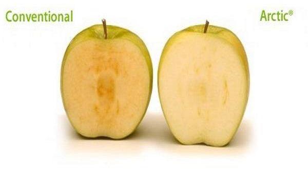 Novità Arctic Apple, la mela OGM invade il mercato americano