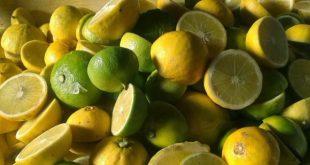 Tenere sotto controllo il colesterolo con il bergamotto