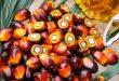 Olio di palma, la svolta: non fa più male alla salute?