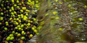 Evento da non perdere il Festival dell'olio del Garda 'Wardagarda', dal 2 al 4 settembre a Cavaion Veronese