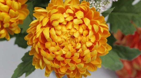 Crisantemo: utile per i colpi di calore e la pelle arrossata