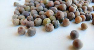 Roveja: l'antico legume chiamato anche pisello bastardo