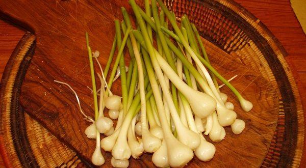 aglio orsino proprietà benefici usi in cucina