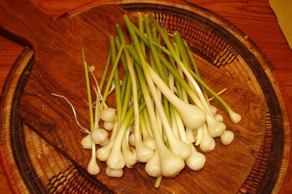 Aglio orsino propriet benefici e usi in cucina for Quando piantare l aglio
