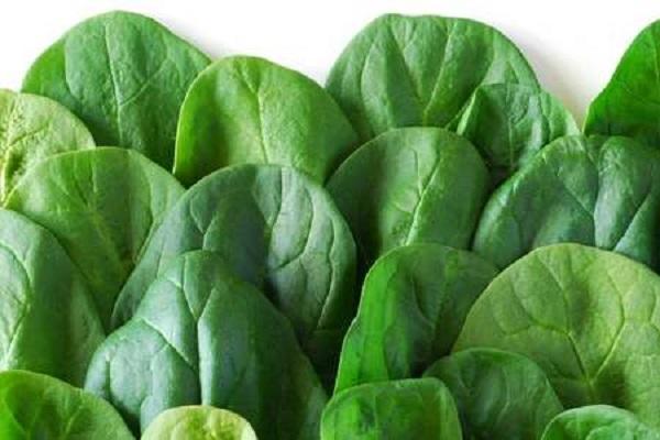 Spinaci fonte di ferro: benefici e proprietà degli ortaggi a foglia verde