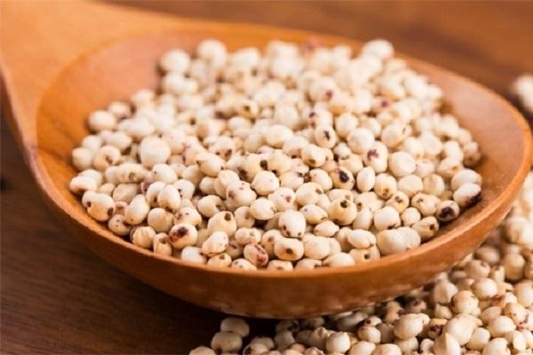 Sorgo cereale antico con meno calorie del riso: proprietà e benefici